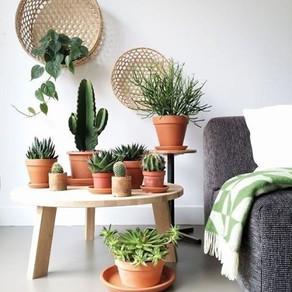 O verde dentro de casa