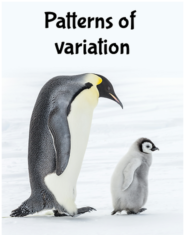 Patterns of variation