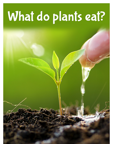 What do plants eat?