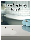 Drain flies in my house!