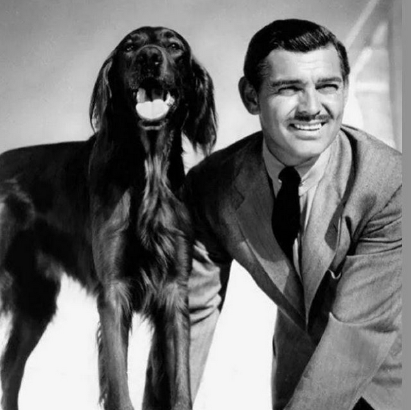 Clark Gable bought his prized Irish setters from breeders on 19th Street in Floral Park.