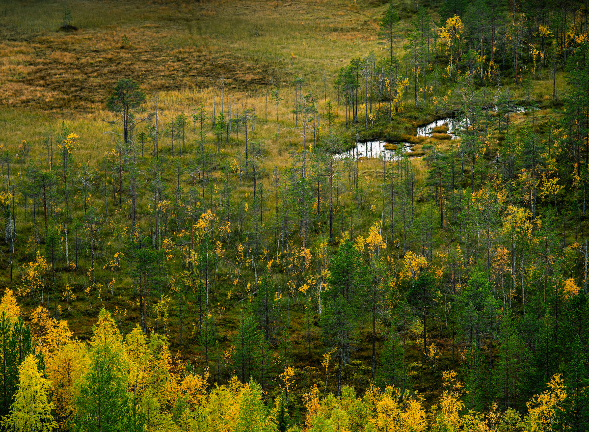 medium_autumn_3108_tedlogart.jpg