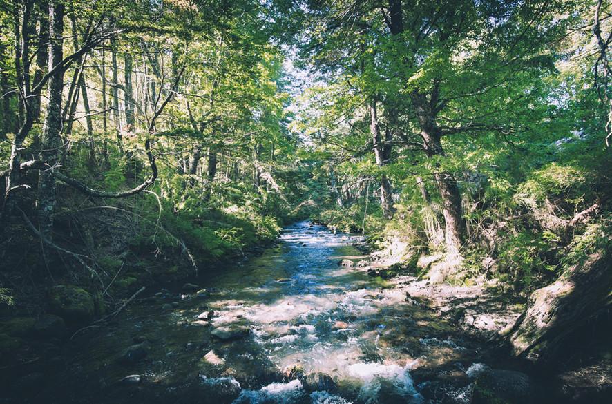 Río Cautín - Malalcahuello, Chile - River