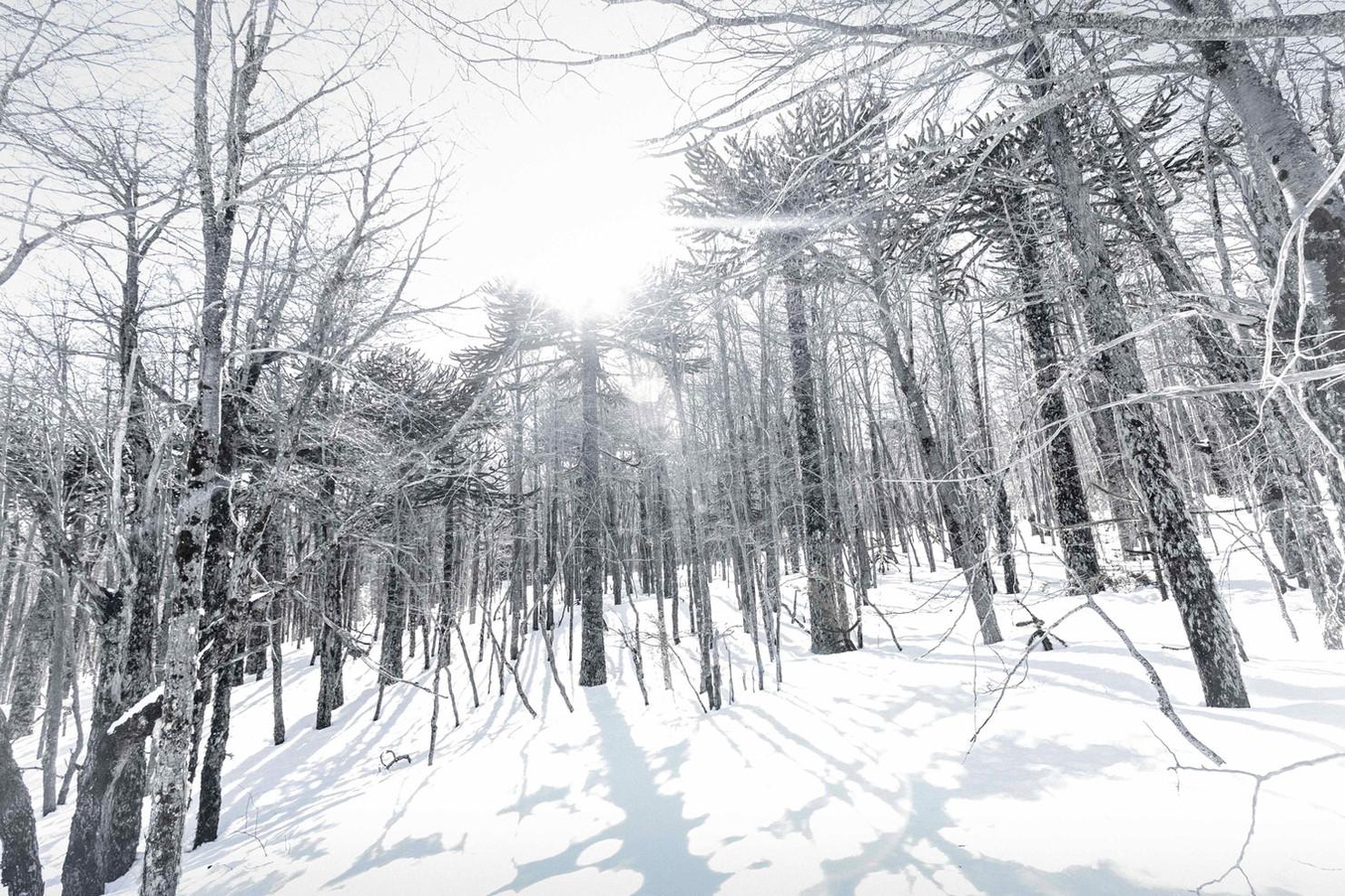 Malalcahuello Nieve & Árboles - Nature - Araucanía Chile, Snow Claudio Ramírez Landscape & Nature Photography
