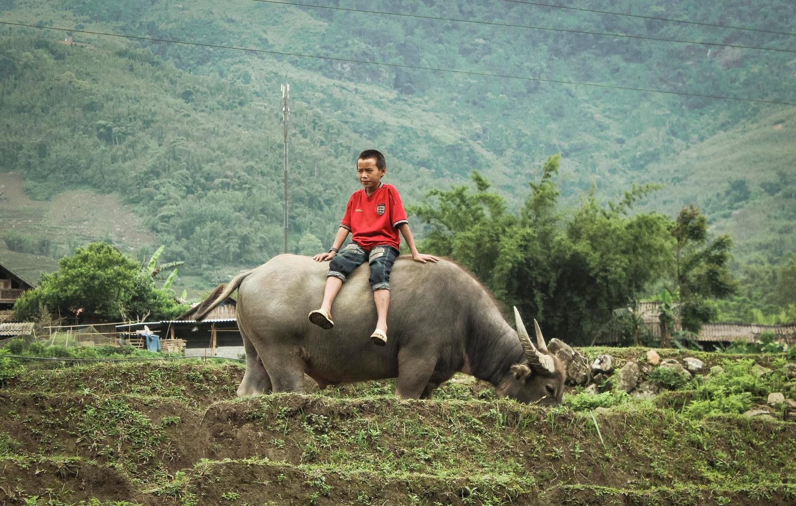 Niño sentado en un búfalo - Vietnam - Fo