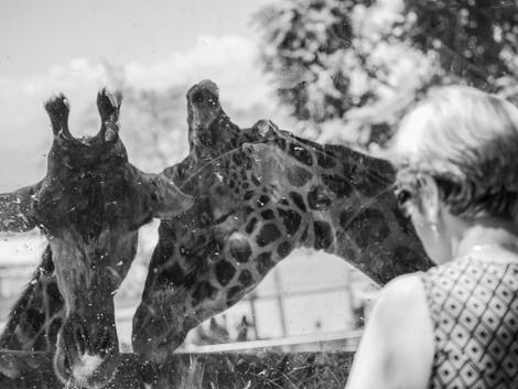 El Zoo no tiene nada de lógico