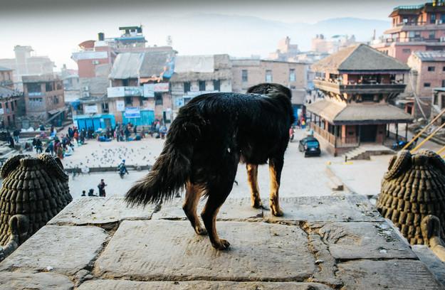 Sunrise Dog - Kathmandu, Nepal - Street Photography