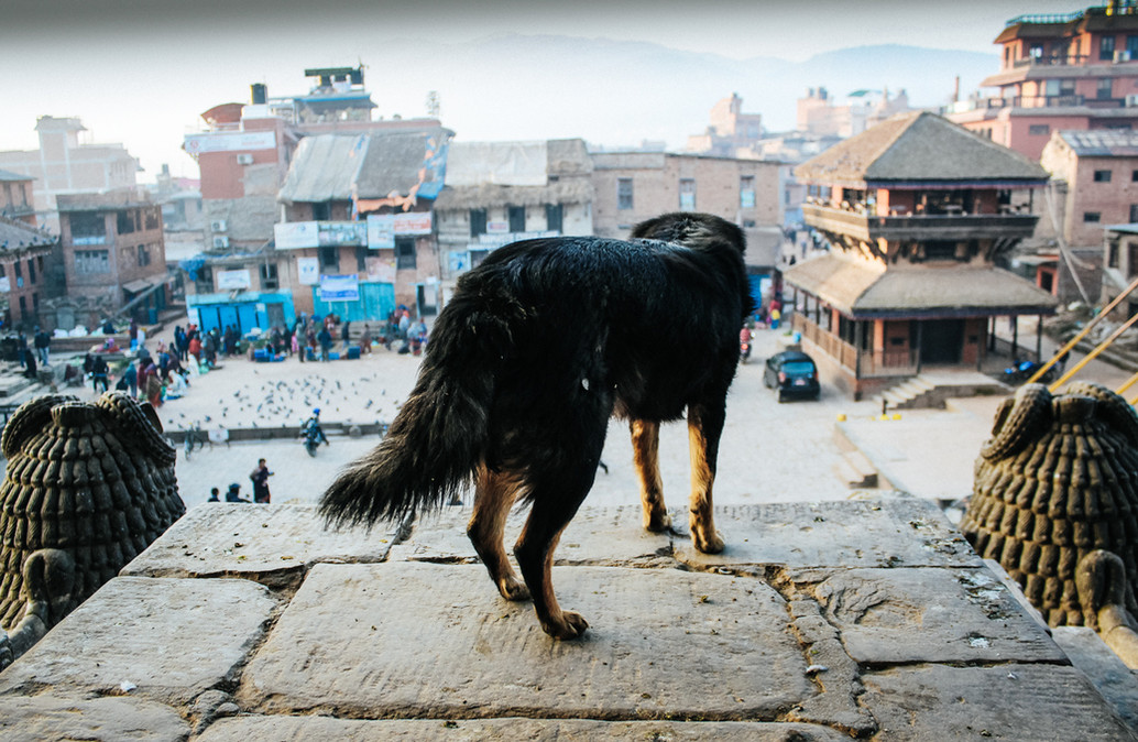 Sunrise Dog - Kathmandu, Nepal - Street Photography - Claudio Ramírez Landscape & Nature Photography