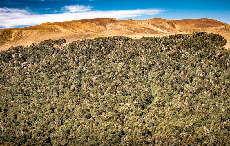 Malalcahuello - Sur de Chile - Claudio Ramírez fotógrafo de naturaleza y paisajes, outdoor photographer
