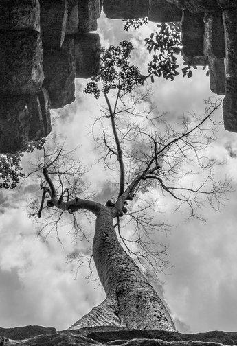 Tree.jpg Claudio Ramírez fotógrafo de naturaleza y paisajes, outdoor and nature photographer