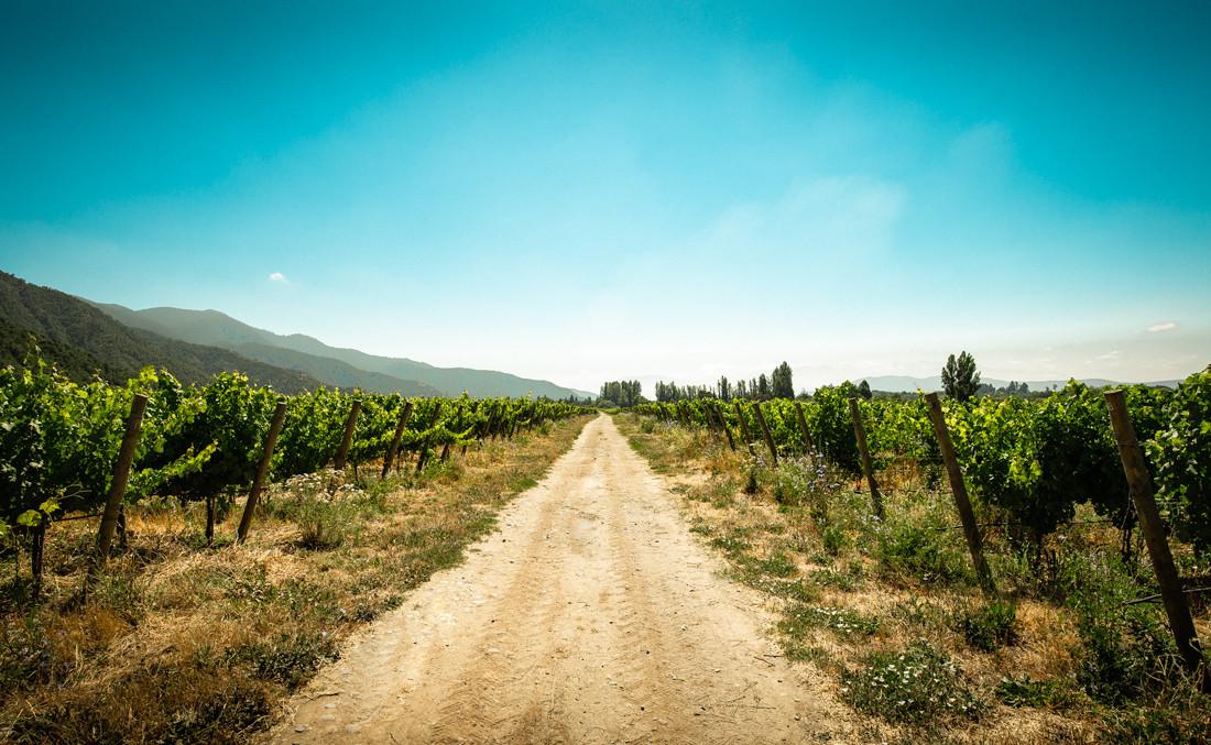 Viña - Wineyard - Nature Landscape