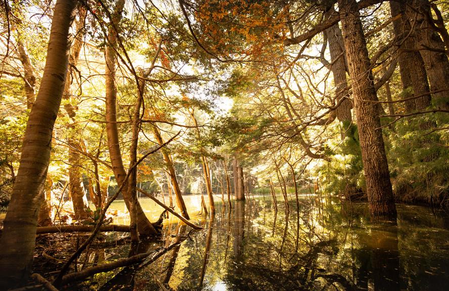 Lagúna, Lonquimay, Chile - Nature Forest Lagoon Claudio Ramírez Landscape & Nature Photography
