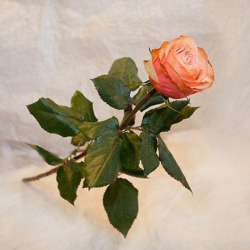 RivieraFlor - Rose Kahala
