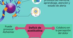 Acetilcolina, importancia y funciones.
