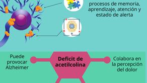 Acetilcolina función e importancia.