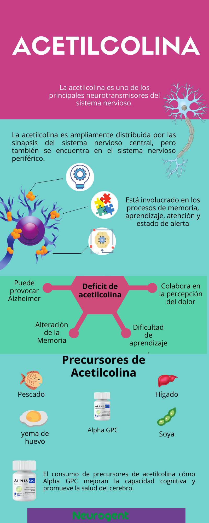 acetilcolina neurotransmisor