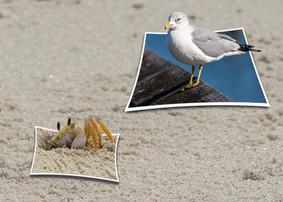 Sand Crab & Seagull