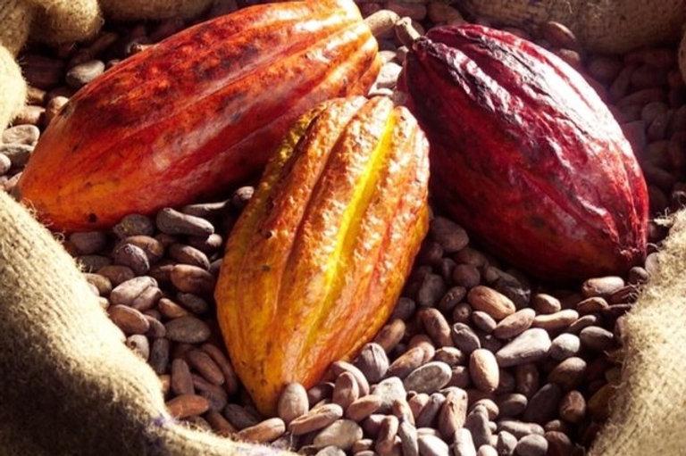 photo de cabosses et des fèves de cacao crues
