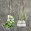 Thumbnail: Large Matamba Ceramic Hanging Planter