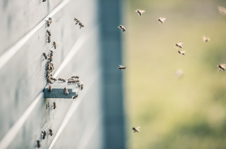 Decline of the Pollinators.