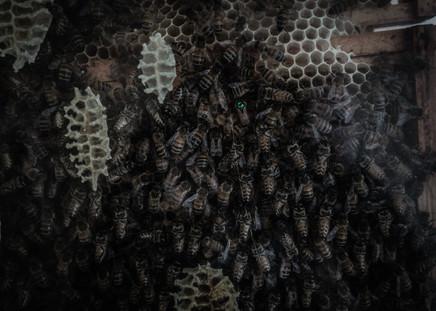 Decline of the Pollinators