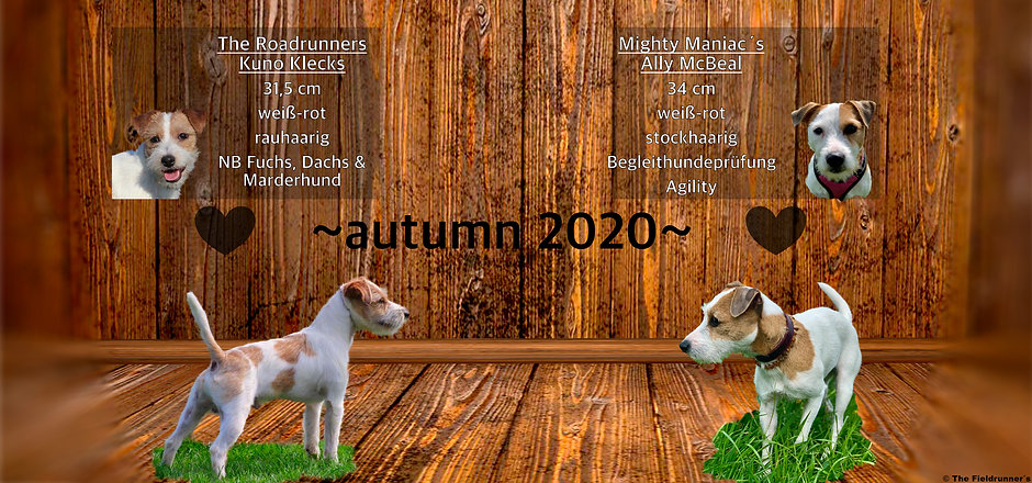 Collage Wurfplanung 2020.jpg