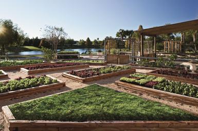 J.W. Marriott Orlando Grande Lakes - Primo Gardens