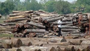 Justiça constitui 9 arguidos por exportação ilegal de madeira