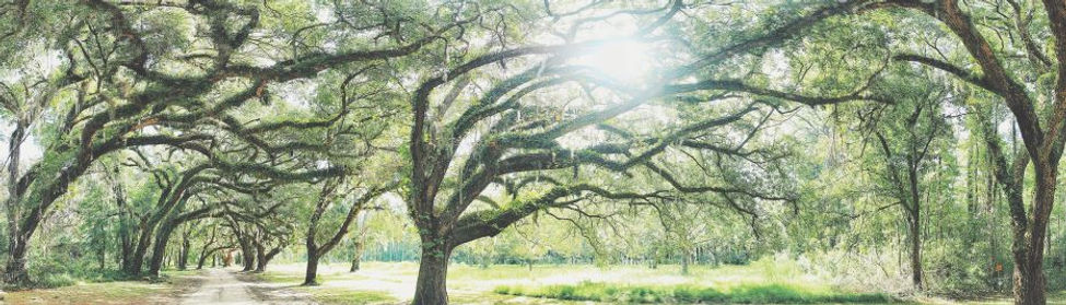 Tree Image from Unsplash - Justin Novell