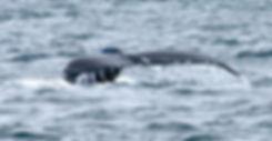 Whale tail_edited.jpg