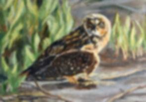 Galapagos owl.jpeg