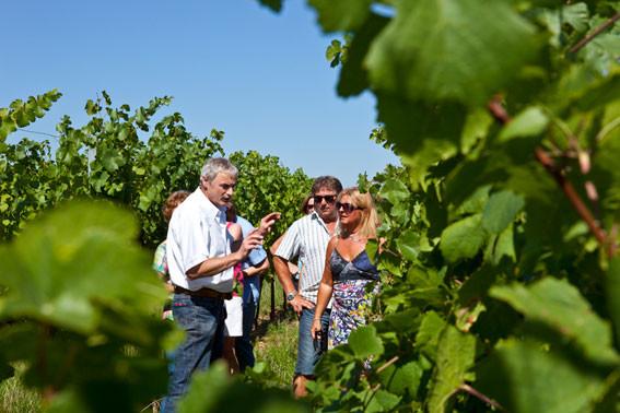Sentier-viticole-9.jpg