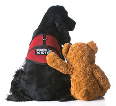 therapy dog sitting beside a teddy bear