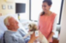 Pet Therapy Dog Visiting Senior Male Pat