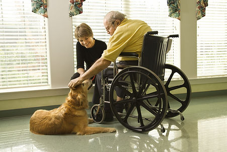 Therapy dog is pet by an elderly man in