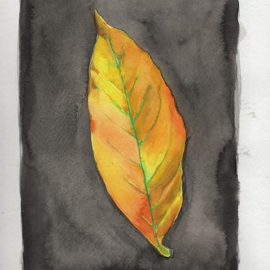 Sketchbook Yellow Leaf.jpg
