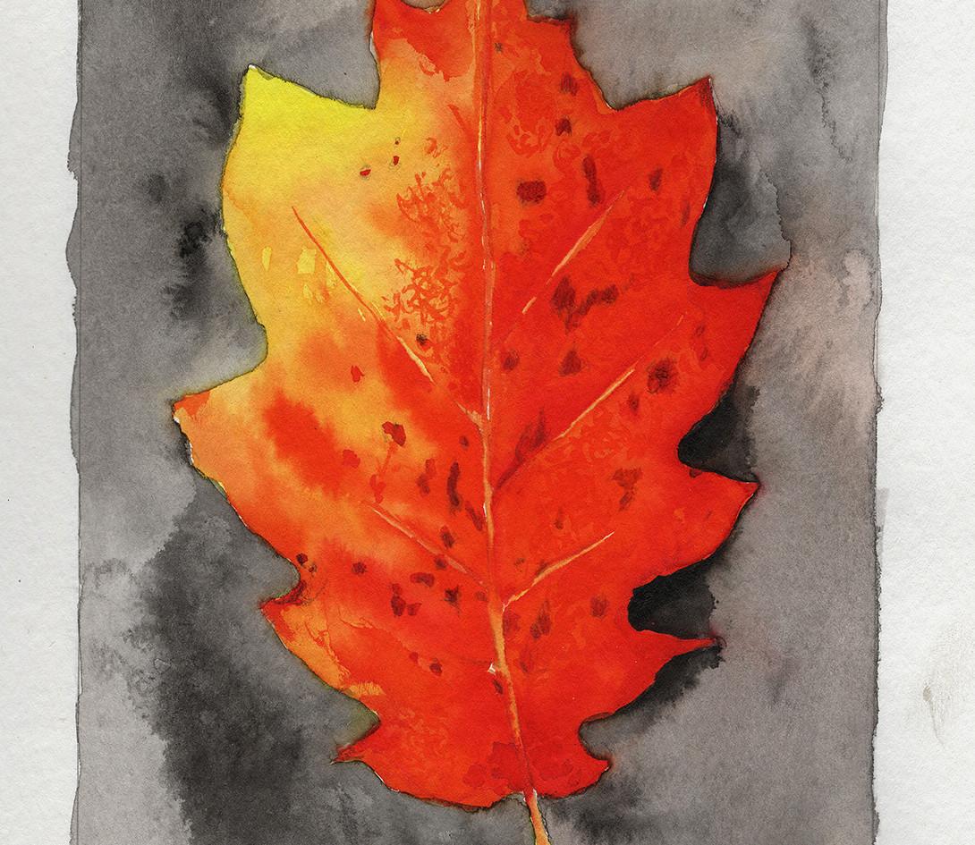 Sketchbook Orange Leaf.jpg