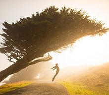 photo-free jump tree.jpg