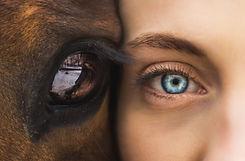 kinga-constellation-animal-healing