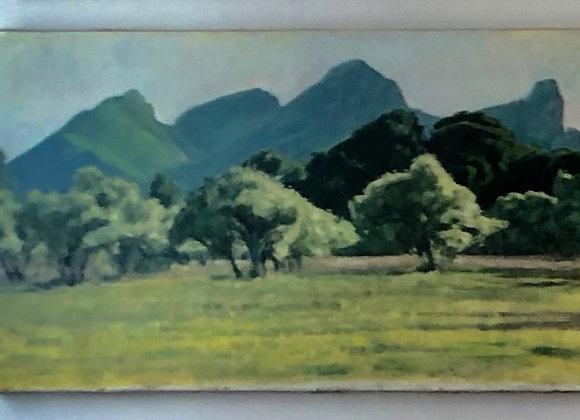 Champ d'oliviers aux pieds des Alpilles  70 x 40