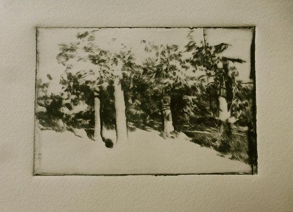 Groupement de pins