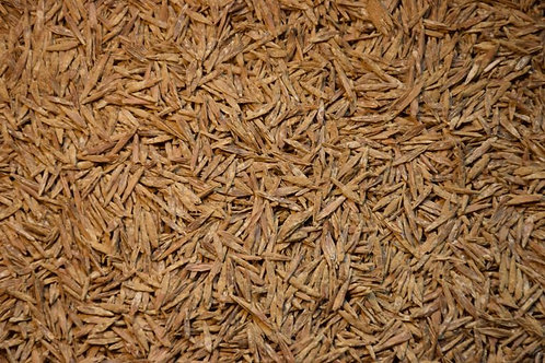 Smooth Brome Grass
