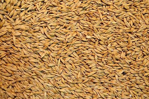 Barley-Hayes Spring Forage