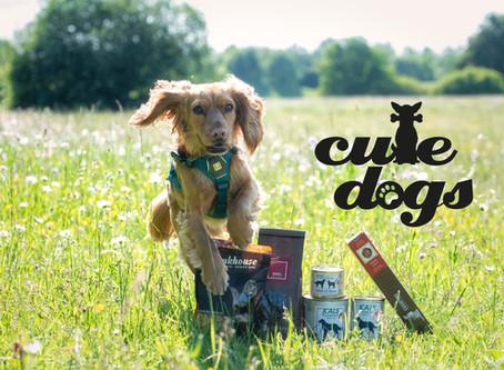 Liebe Hundebesitzer! Nur das Beste für Ihre vierbeinigen Freunde