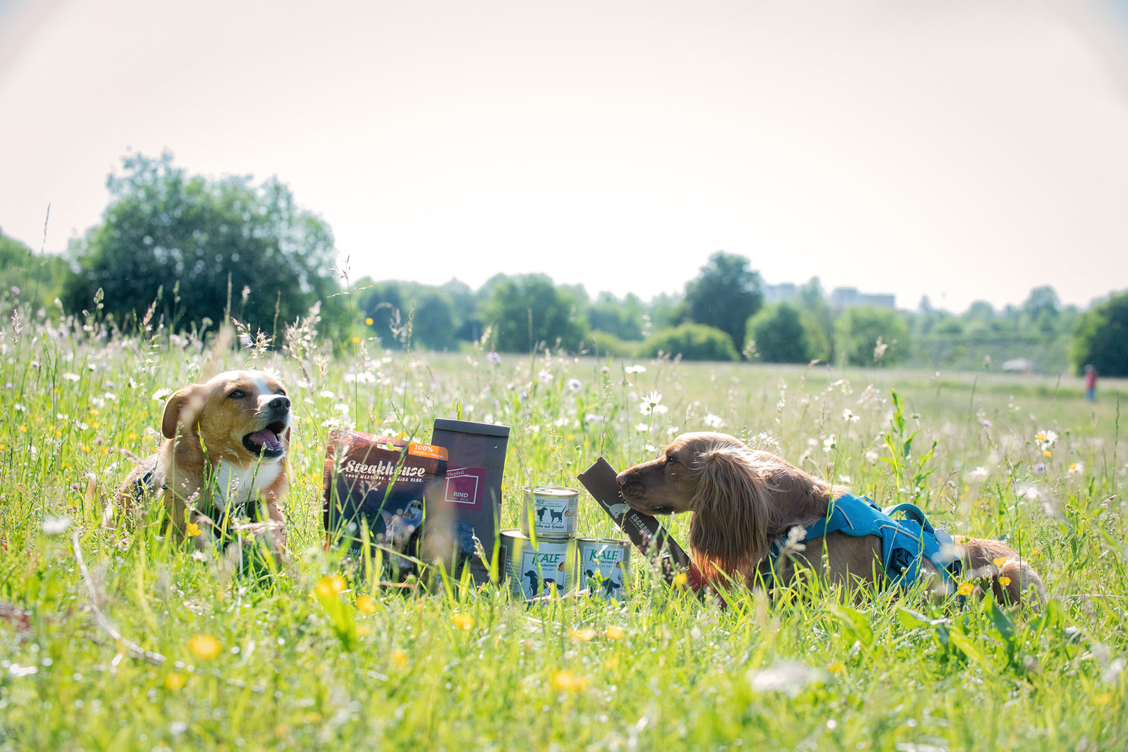 Hundefutter Unterhaching