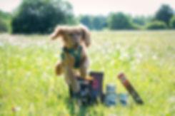 Cute Dogs Babette Ferchen
