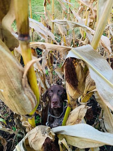 Jule im Mais