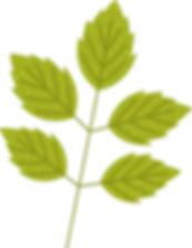 leaf_6.png
