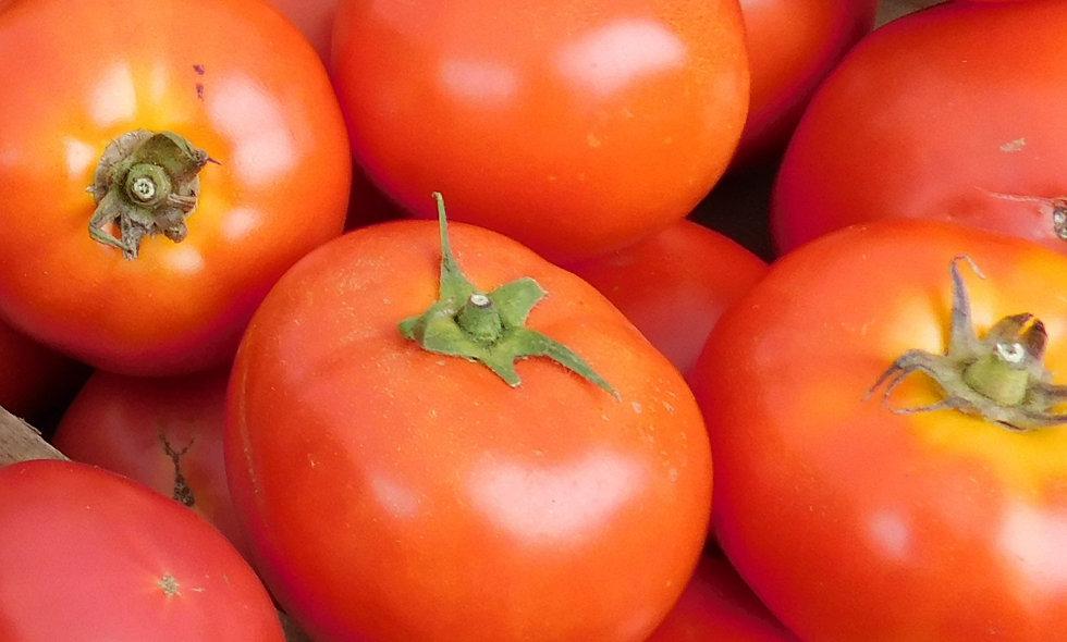 Slicer Tomato