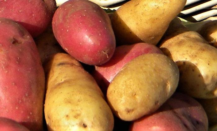 Austrian Crescent Fingerling Potato